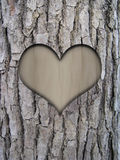 Trunk bark and love heart. Tree trunk bark of cinnamomum camphora and love heart Stock Photo