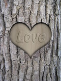 Trunk bark and love heart Stock Images