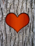 Trunk bark and love heart. Tree trunk bark of cinnamomum camphora and red love heart Royalty Free Stock Photography