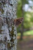Trunk, Branch, Tree, Moth Royalty Free Stock Images