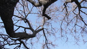 Trunk And Branches Of A Tree stock footage