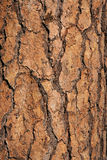Trunk close up Royalty Free Stock Images