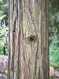 Trunk. Close up of trunk Stock Photo