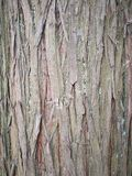 Trunk. Close up of trunk Royalty Free Stock Photography