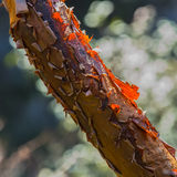 Colorful tree trunk with colored skins Royalty Free Stock Photo