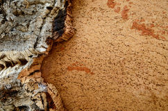 Trunk of  cork  tree stripped Royalty Free Stock Photos