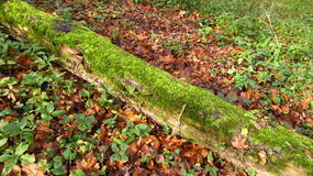 Trunk covered with moss Stock Photos