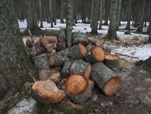 The logs in the forest Stock Photography