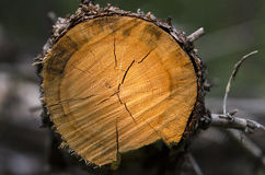 Trunk cut Stock Images