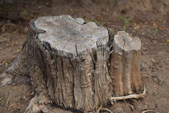 Trunk Royalty Free Stock Photography