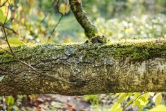 The trunk of the fallen birch. Closeup stock images
