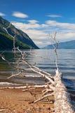 Trunk of a fallen tree on the beech of Lake Teletskoye Royalty Free Stock Photography