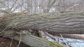 Trunk of a fallen tree in the forest. The trunk of a fallen tree in the forest stock video footage
