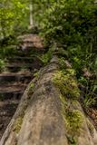Trunk of a fallen tree with moss next to a staircase in the middle of the forest. In Kelmonderbos Beek south Limburg in the Netherlands Holland, copy space or royalty free stock photos