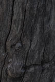 Trunk gray wood texture Stock Images