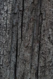 Trunk gray wood texture. And background Stock Photos