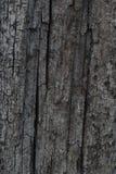 Trunk gray wood texture Stock Photos