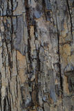 Trunk gray wood texture Stock Image