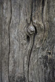 Trunk gray wood texture. And background Royalty Free Stock Photography