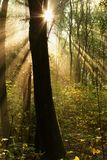 Trunk. The image of a tree in the morning in the Woods royalty free stock photography