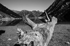 Trunk in a lake. Photograph of a trunk cut in a lake and in the background the mountains and the sky Stock Images
