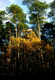 Forest mixed in autumn season Royalty Free Stock Photography
