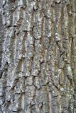 Texture of a bark of a tree, background royalty free stock photos