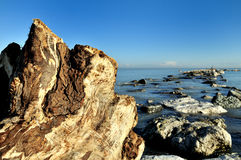 Trunk and marine rocks. An old trunk in foreground on the seaside with marine rocks in background Royalty Free Stock Image