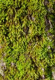 Trunk moss Stock Image