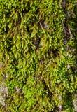 Trunk moss Stock Image