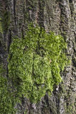 Trunk with moss Stock Image