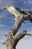 Trunk Of Dead Trees And Sky Stock Images