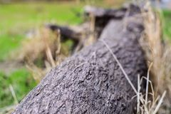 Trunk of old fallen tree, selective focus Royalty Free Stock Photos