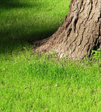 Trunk of an old tree on a green grass Stock Image