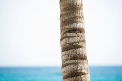 The trunk of a palm tree against the sky and the sea.  Royalty Free Stock Photo
