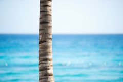 The trunk of a palm tree against the sky and the sea.  Stock Image
