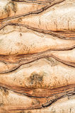 Trunk of a palm tree. Close-up Stock Photo