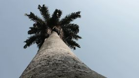 Trunk Of Palm Tree. Stock video of palm tree trunk stock video