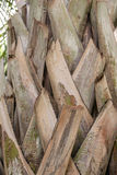 Trunk of palm tree. Royalty Free Stock Photography