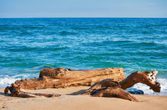 Trunk on the Sea Shore Royalty Free Stock Images