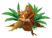 A trunk with a small and a big orangutan vector illustration