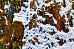 Trunk In Snow. Tree trunk surrounded by snow Stock Images