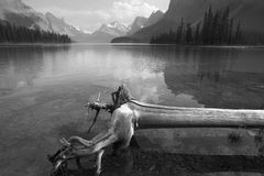 Trunk in Spirit island in Maligne Lake. Jasper. Canada. Black and white Royalty Free Stock Photos
