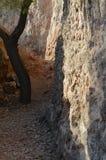 Stone & trunk royalty free stock photos