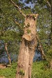 Trunk in the sunshine. Trunk in the wood in that suns itself Royalty Free Stock Images