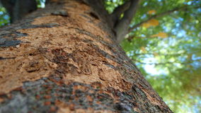 Trunk texture. Close up of a tree in a summer day. Aging of a living part of nature Royalty Free Stock Photo