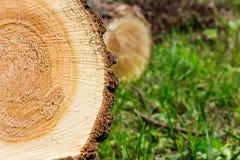Trunk of tree Stock Photo