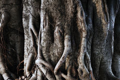 Trunk of tree. Close up of tree trunk Stock Photography
