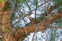 Trunk of the tree royalty free stock photography