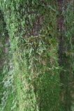 Trunk of the tree covered by moss Royalty Free Stock Photos